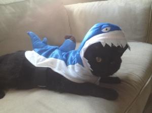 Dragon loves me shark-costume much.
